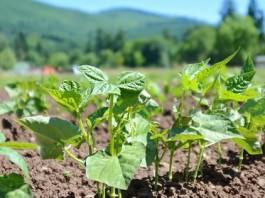 biotechnology farming